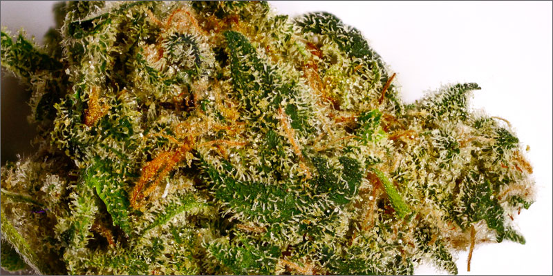 strains for pain 3 The Best Strains of Marijuana For Pain Relief