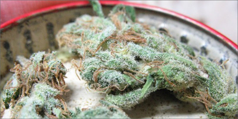 strains for pain 4 The Best Strains of Marijuana For Pain Relief