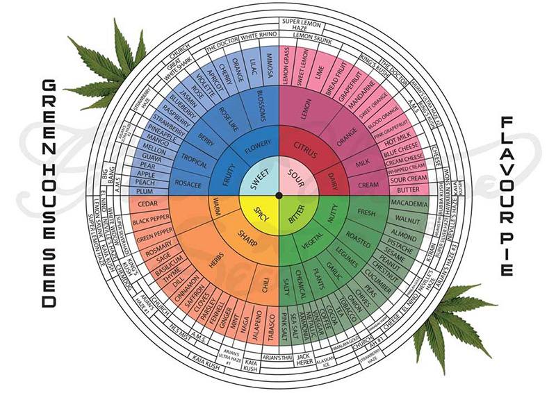 terpenes chart What Are Cannabis Terpenes And What Do They Do?