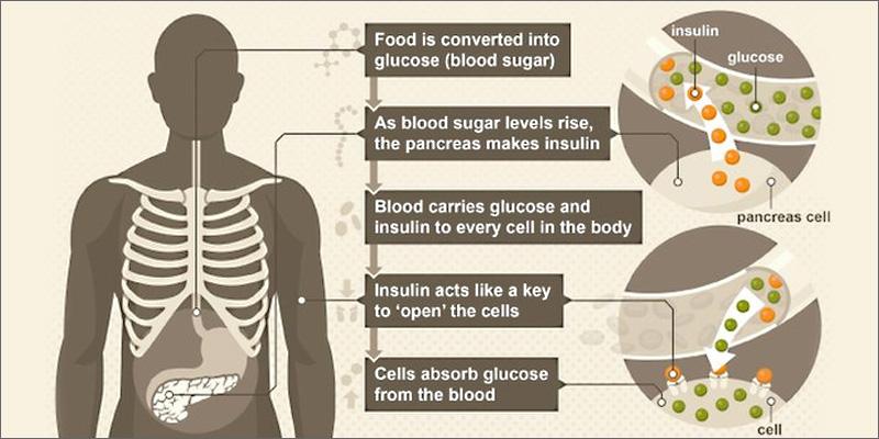 diabetes insulin Marijuana and Diabetes   An In depth Look