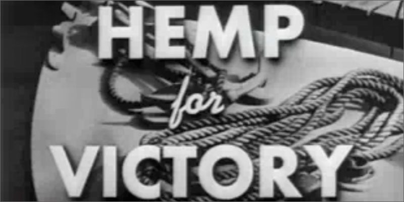 hemp victory Whats The Difference Between Hemp And Cannabis