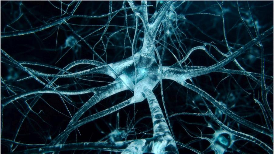 neurons Marijuana and Diabetes   An In depth Look
