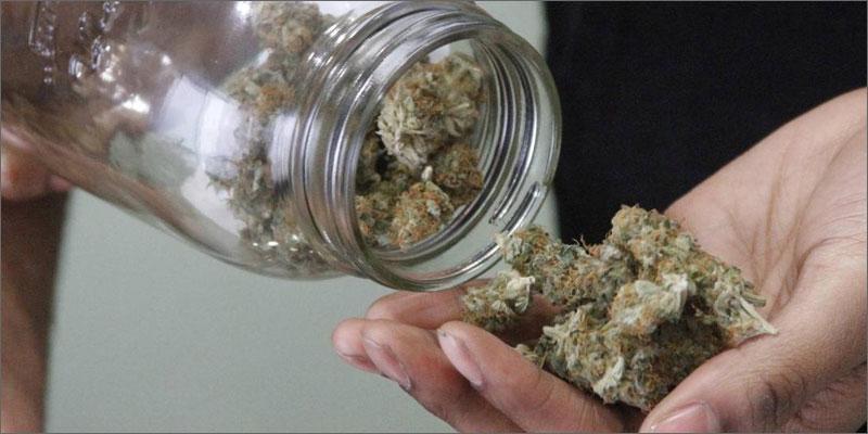 spice buds Woman Fights Spice Drug Craze With Real Marijuana