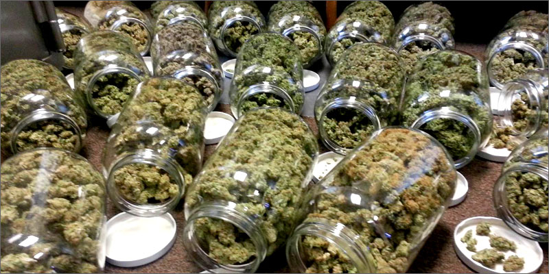 how to cure weed How To Grow Marijuana Step 5: Curing & Max Your Bud Hacks!