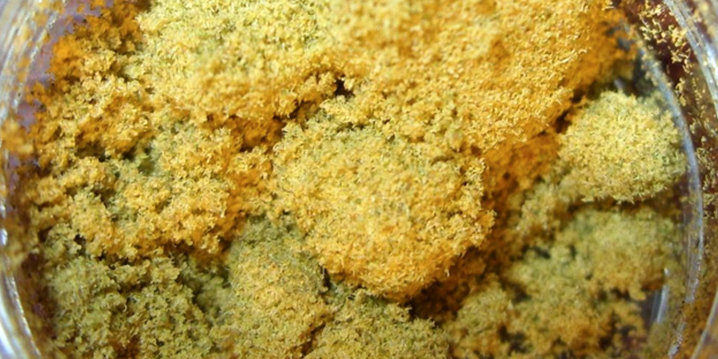 keif How To Make Potent Cannabis Oil From Kief