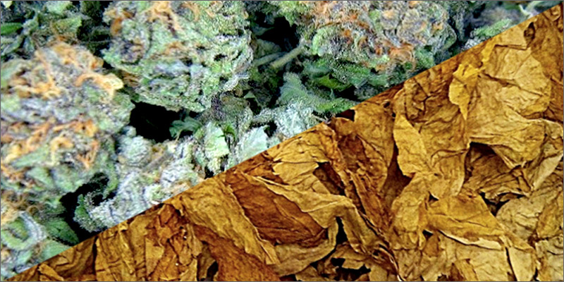 leaves It Is Claimed Marijuana Smoke Contains Carcinogens But Doesn't Cause Cancer. How?