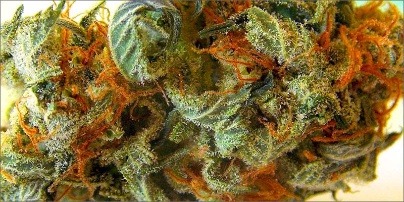 weed The Odd Science Behind Marijuana And Metabolism