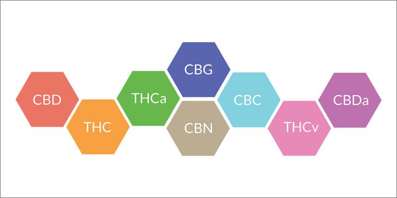 2 importance of cannabinoid receptors graphic Why Are Cannabinoid Receptors Important?