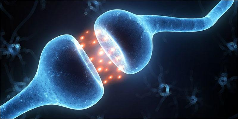 3 importance of cannabinoid receptors neuron Why Are Cannabinoid Receptors Important?