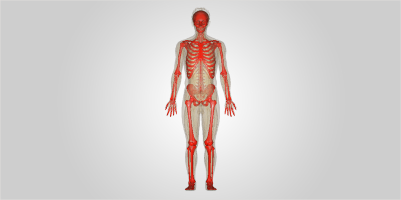 no bones ci 1 No Bones About It: How Cannabis May Combat Bone Diseases
