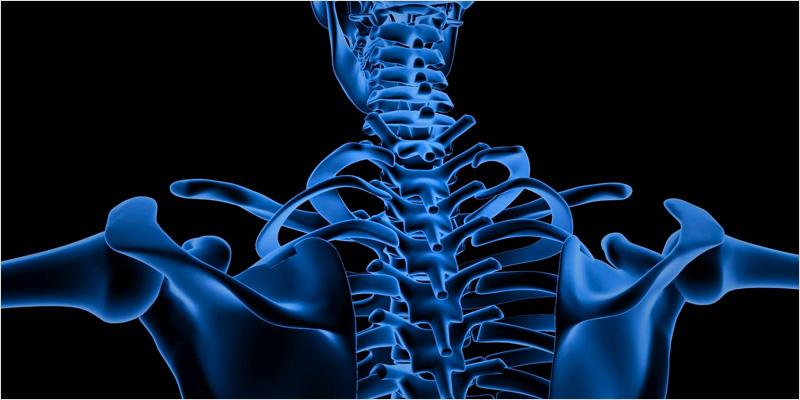 no bones ci 2 No Bones About It: How Cannabis May Combat Bone Diseases