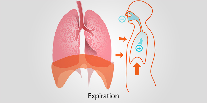 Healthy Lungs 2 1 Healthy Lungs #2: Marijuana And COPD