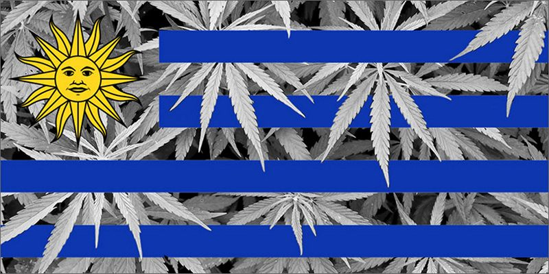 Image result for Uruguay Cannabis
