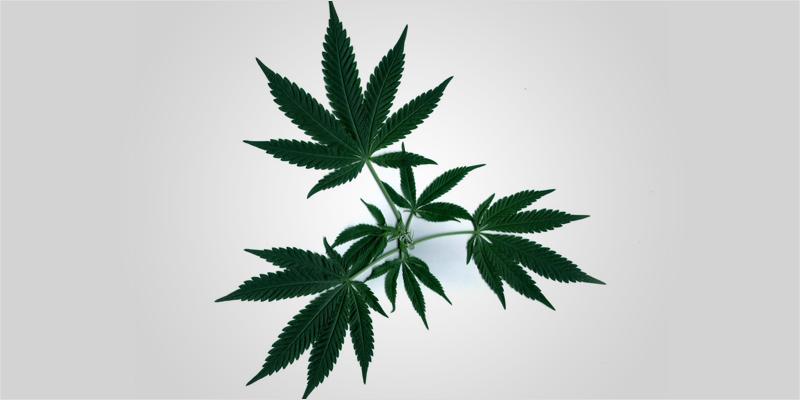 Dream Series 2 3 Sweet Dreams #2: How Cannabis Affects Deep Sleep