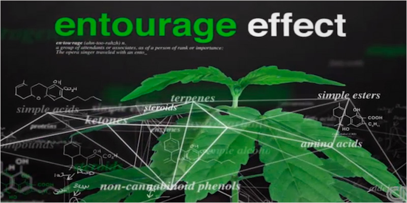The Entourage Effect 3 An Easy Guide To Understanding The Entourage Effect