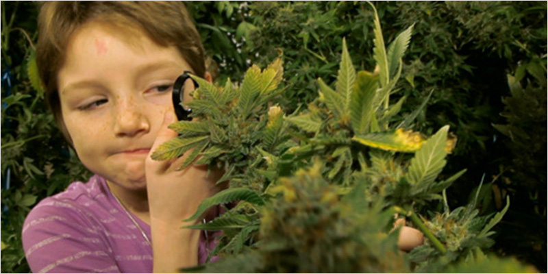 FDA Approves Candy Amphetamines 3 FDA: Candy Amphetamines For Kids Are Safer Than THC Edibles For Adults