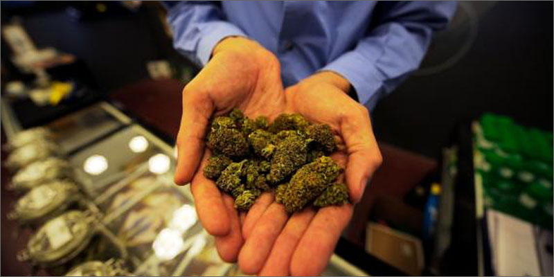 ma court challenge cannabis ballot hands buds 4 Things You Need To Know If Youre Charged With Cannabis Possession
