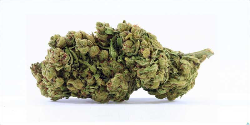 1 best medical marijuana strains avidekel 10 Best Medical Cannabis Strains You Should Be Using
