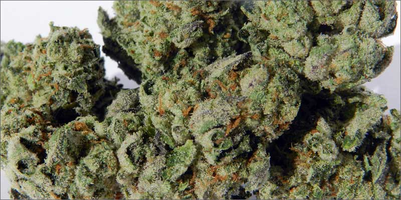 3 best medical marijuana strains girlscoutcookies 10 Best Medical Cannabis Strains You Should Be Using