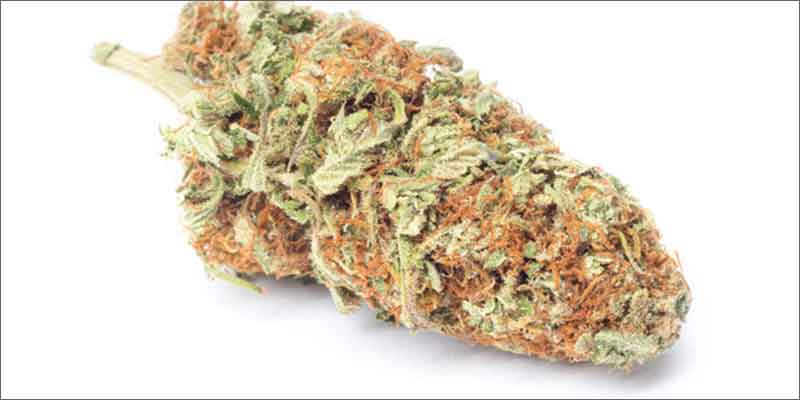 8 best medical marijuana strains harlequin 10 Best Medical Cannabis Strains You Should Be Using