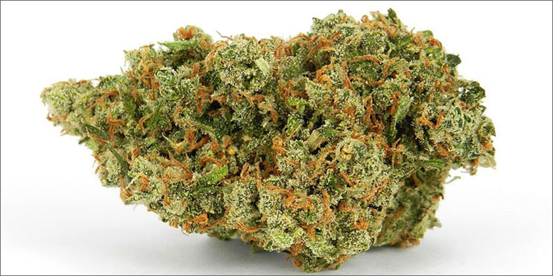 10 best strains cannabis pain relief jack herer Ultimate Guide To Strains You Need To Use For Pain Relief
