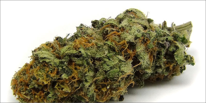 4 best strains cannabis pain relief harlequin Ultimate Guide To Strains You Need To Use For Pain Relief