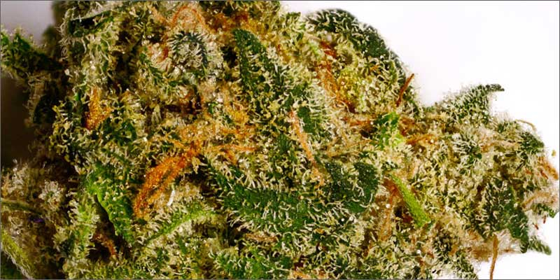 7 best strains cannabis pain relief afghan kush Ultimate Guide To Strains You Need To Use For Pain Relief