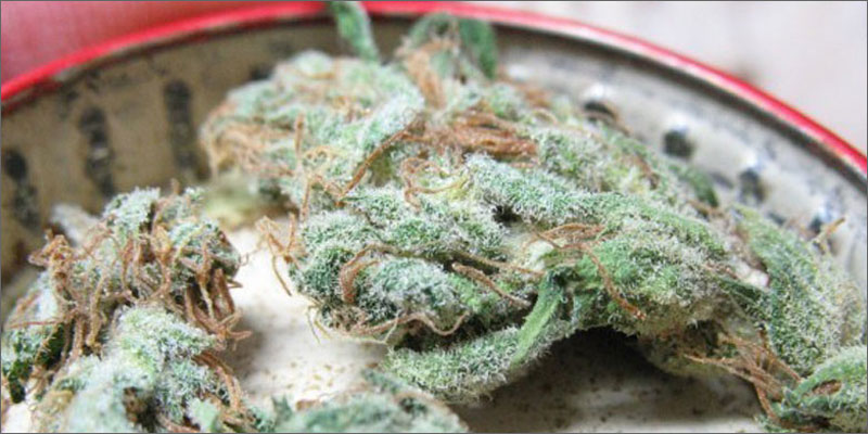 8 best strains cannabis pain relief white widow Ultimate Guide To Strains You Need To Use For Pain Relief