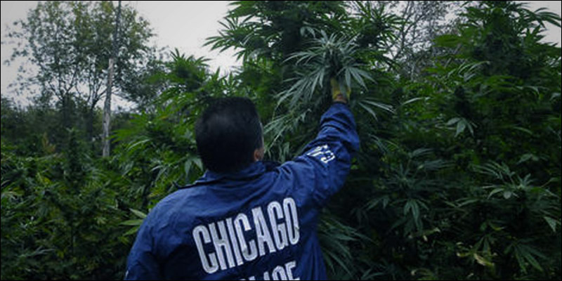 Illinois Becomes the 21st State 2 Illinois Is Officially The 21st State To Decriminalize Weed