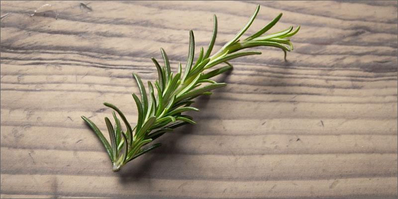 3 medicinal herbs with cannabis rosemary 7 Medicinal Herbs To Pair With Cannabis