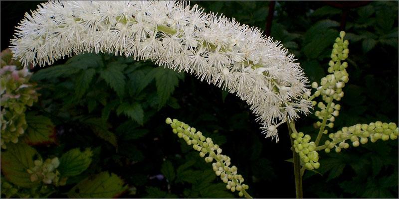 6 medicinal herbs with cannabis 7 Medicinal Herbs To Pair With Cannabis