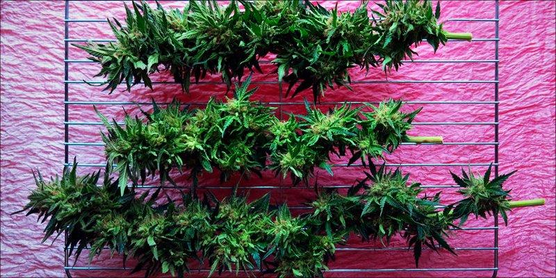 Autoimmune Disease 4 Autoimmune Diseases: How Does Cannabis Help?