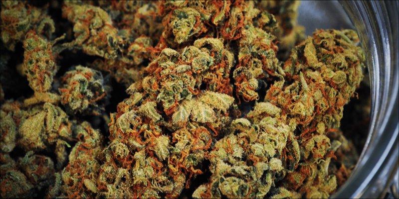 Autoimmune Disease 5 Autoimmune Diseases: How Does Cannabis Help?
