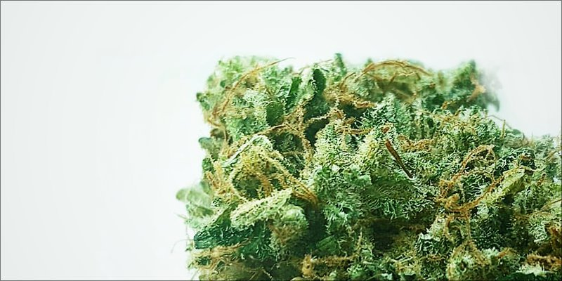 ACDC 1 Strain Of The Day: ACDC