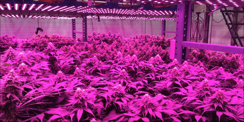 LED Lights 2 How To Grow Marijuana: Step 1. Equipment & Set Up