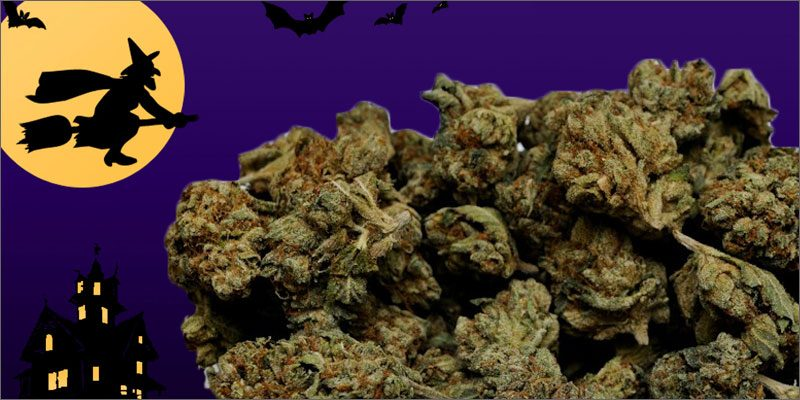 14 halloween themed strains for a frightfully fantastic night - Halloween Themed Pictures