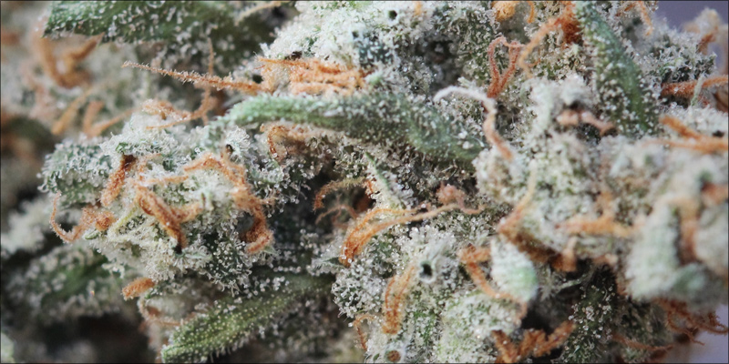 pinene 3 Pinene: The Powerful Terpene That Combats Paranoia And Asthma