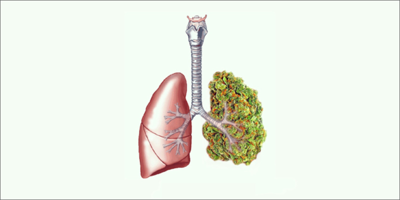lungs How To Smoke Weed and Keep Your Lungs Healthy