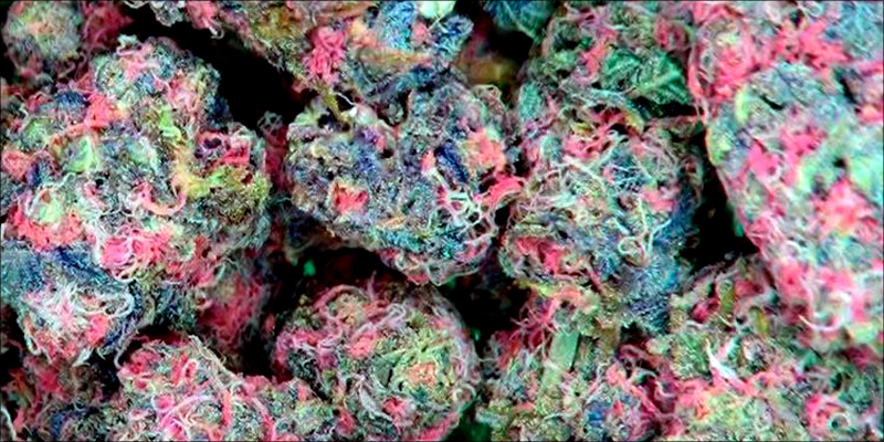 Is Pink Weed 2 Pink Cannabis Is A Real Thing And Its Gorgeous