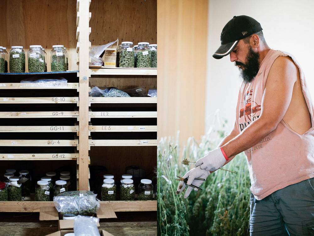 cannabis photographer kristen angelo herb 2 This illegal pot growers daughter is fighting corporate cannabis with photography