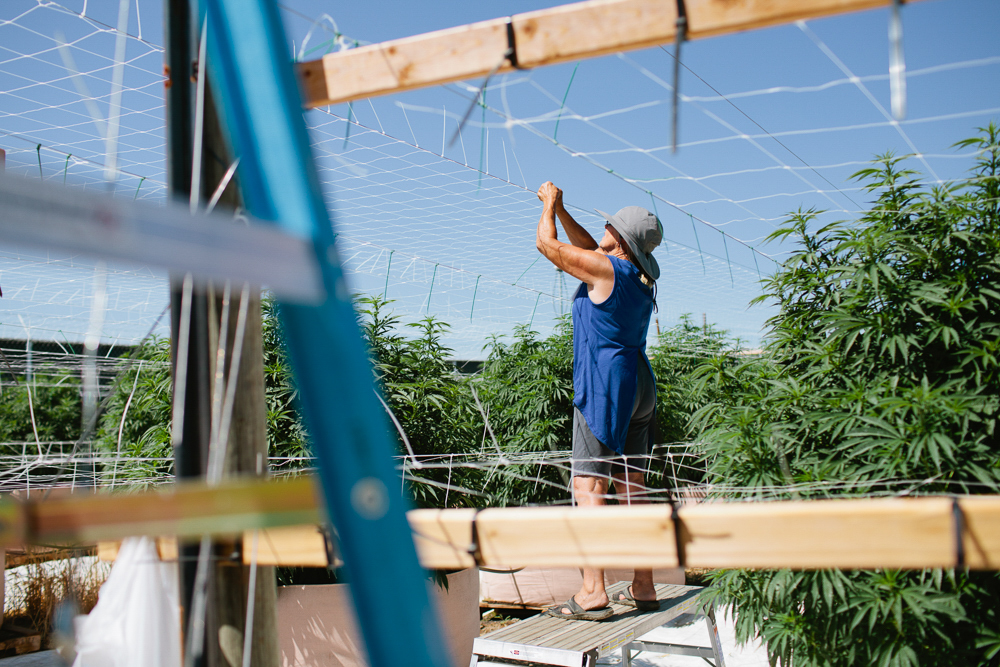 cannabis photographer kristen angelo herb 416 This illegal pot growers daughter is fighting corporate cannabis with photography