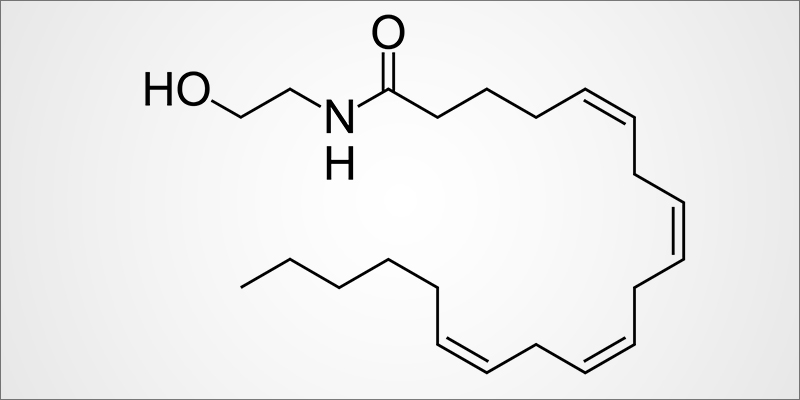 Anandamide 1 Anandamide (AEA): The Bliss Molecule Is The Human Version Of THC