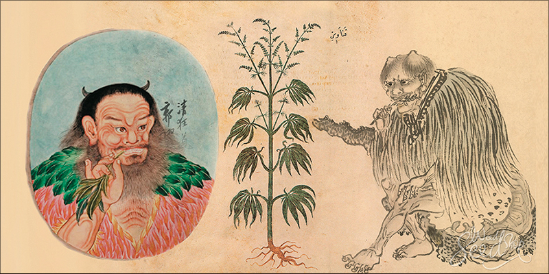 China Has Quietly 2 China Has Quietly Grown Into A Cannabis Superpower