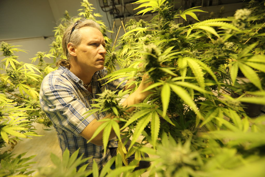 GettyImages 816369142 What Canadian smokers will do about the predicted weed shortage in 2018