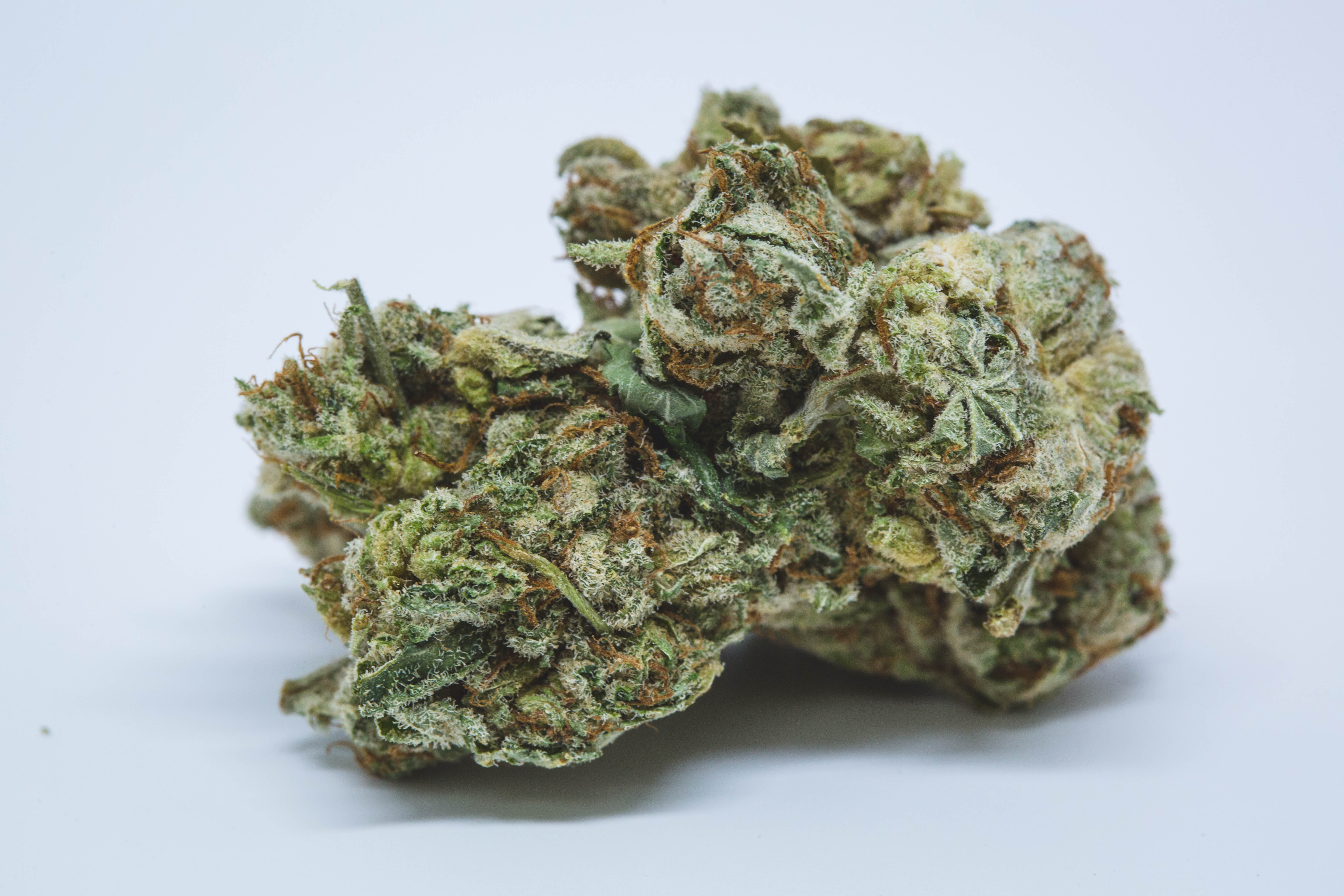 Traphouse Tuna Kush 1 Want to Grow Weed Outside? These are the 10 Best Strains for Different Climates