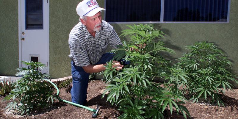 Dean Jones Examines One Of Several Marijuana Plants He Is Now Growing In His  Backyard. He And His Wife Received A Check For 6850 From An Insurance  Company ...