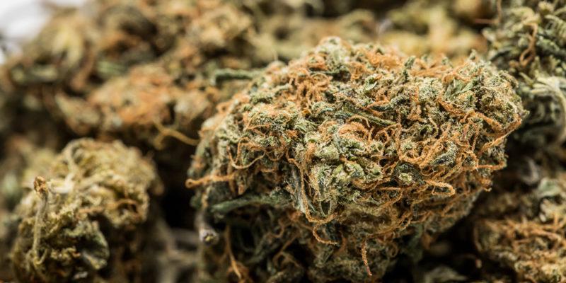 Cannatonic Weed; Cannatonic Cannabis Strain; Cannatonic Sativa Marijuana Strain