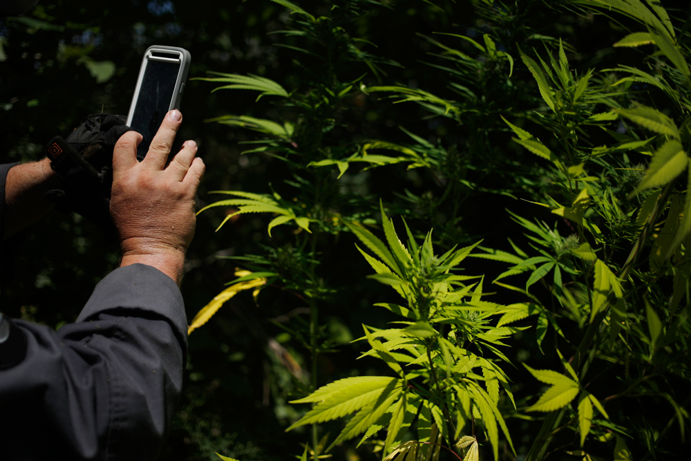 CopsSocialMedia2 How police are using social media to bust weed smokers
