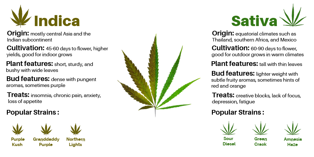 sativavsIndica1 The ultimate guide on indicas vs. sativas