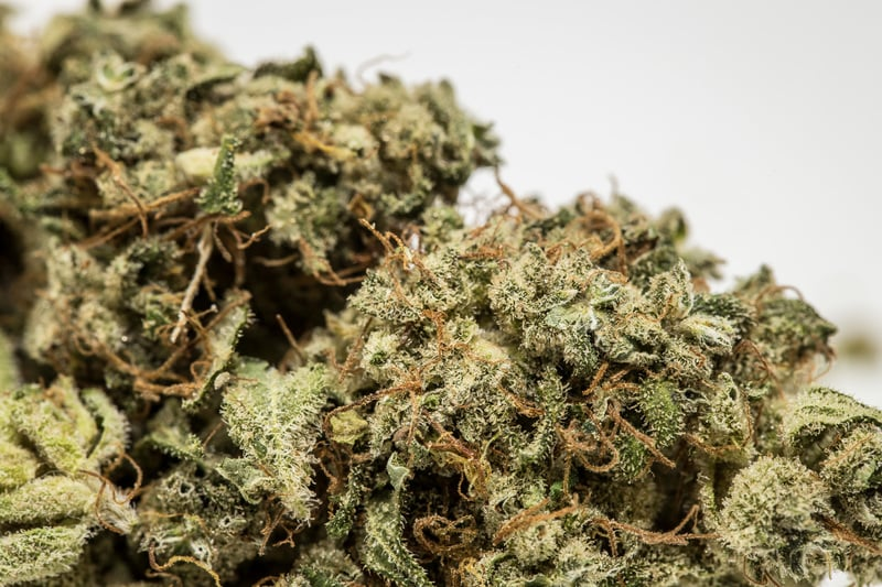 Emerald Jack Marijuana Strain These are the best weed strains on the planet right now